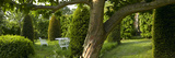 Trees, Lawn and Clipped Bushes in Garden, Lincolnshire Photographic Print by Richard Bryant