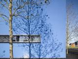 Shadow of Slim Trees on Blue Wall Photographic Print by Daniel Hopkinson