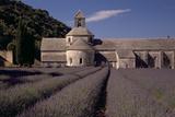 Abbaye Notre-Dame De Senanque, Gordes - Provence, France Photographic Print by Achim Bednorz