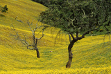 Trees Among Yellow Wildflowers in the Algarve Photographic Print by Ton Kinsbergen