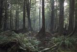 Second Beach Coastal Rain Forest, Olympic National Park, Washington, Usa Photographic Print by Natalie Tepper