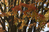 Autumn Trees Photographic Print by Natalie Tepper