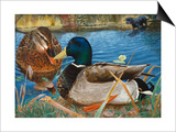 Mallards Prints by Rusty Frentner