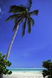 Palm Tree on a White Sand Beach, Bahamas Photographic Print by Natalie Tepper