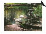 Swan Song Posters par Kevin Dodds