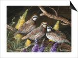 Bobwhite Trio 1 Poster par Trevor V. Swanson