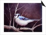 Geai bleu Affiches par Kevin Dodds