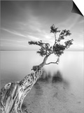 Water Tree V Prints by Moises Levy
