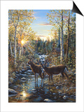 Whitetail Deer Posters by Jeff Tift