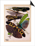 Insects, Plate 2 Posters