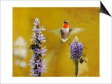 Breakfast with the Bees Hummingbird Prints by Jai Johnson