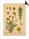 Dandelion Posters