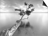 Water Tree XIII Prints by Moises Levy