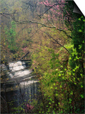 Spring in Clifty Creek State Park, Indiana, USA Prints by Anna Miller