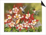 Hummingbird Feeding Frenzy Prints by William Vanderdasson