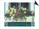 Nantucket Bloom Prints by Bruce Dumas
