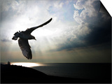 Seagul in flight over Lake Michigan beach, Indiana Dunes, Indiana, USA Art by Anna Miller