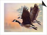 Canada Geese Art by Rusty Frentner