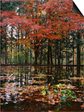 Red leaves over pond, Eagle Creek Park, Indianapolis, Indiana, USA Prints by Anna Miller