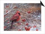 Cardinal and Berries Affiche par Kevin Dodds