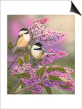 Lilacs and Chickadees Posters by William Vanderdasson
