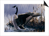 1992 Canada Goose Prints by Wilhelm Goebel