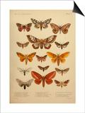 American Lepidoptera, Plate 3 Sztuka