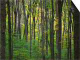 Yellowwood State Forest, Indiana, USA Prints by Anna Miller