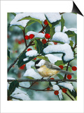 Chickadees and Holly Branch Posters by William Vanderdasson