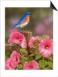Bluebird with Hibiscus Prints by William Vanderdasson