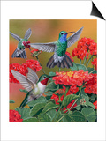 Hummingbirds and Flowers Print by William Vanderdasson