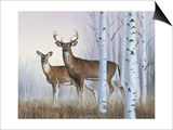 Deer in Birch Woods Art by Rusty Frentner