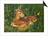 Fawn Art by William Vanderdasson