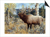 Wapiti Print by Jeff Tift