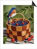 Blueberry Basket Prints by William Vanderdasson