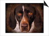 German Shorthaired Pointer Portrait Art by Jai Johnson
