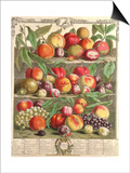 August, from 'Twelve Months of Fruits', by Robert Furber (C.1674-1756) Engraved by C. Du Bose, 1732 Poster par Pieter Casteels