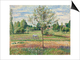Meadow with Grey Horse, Eragny; Le Pre Avec Cheval Gris, Eragny, 1893 Posters par Camille Pissarro