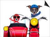 Motorbike Dogs Prints by Javier Brosch