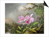 Study of an Orchid, 1872 Posters by Martin Johnson Heade
