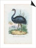 Emu, 1863-79 Posters by Raimundo Petraroja