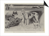 Sketches at the Ladies' Kennel Association's First Show, at the Ranelagh Club, Barn Elms Prints by Cecil Aldin