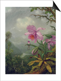 Hummingbird Perched on an Orchid Plant, 1901 Prints by Martin Johnson Heade
