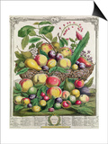 July, from 'Twelve Months of Fruits' Prints by Pieter Casteels
