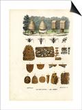 Bees, 1863-79 Prints by Raimundo Petraroja