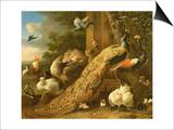 Peacock, Parakeet, Pelican, Crane and Poultry Art by Melchior de Hondecoeter