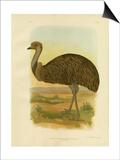 Emu, 1891 Affiche par Gracius Broinowski