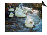 Ducks on a Pond, C1884-1932 Poster by Alexander Koester