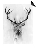 Red Deer Prints by Alexis Marcou