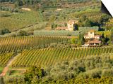 Italy, Tuscany. Vines and Olive Groves of a Rural Village Plakater af Julie Eggers